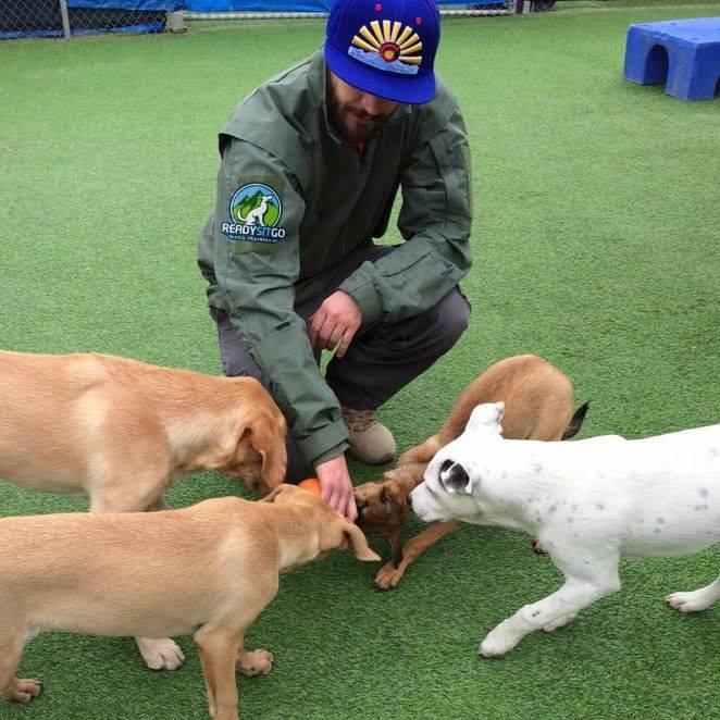 Dog Training Denver