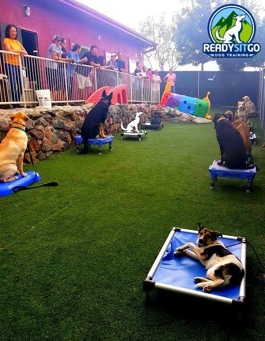 Dog Training in Denver Colorado